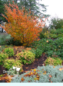 North Portland residential landscape design for year round color