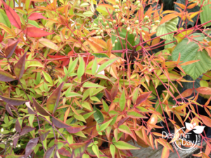 Colorful Four Season Plant for Portland Residential Landscape Designs
