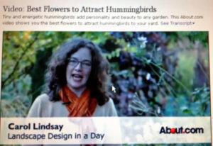 Carol Lindsay on Humminbirds